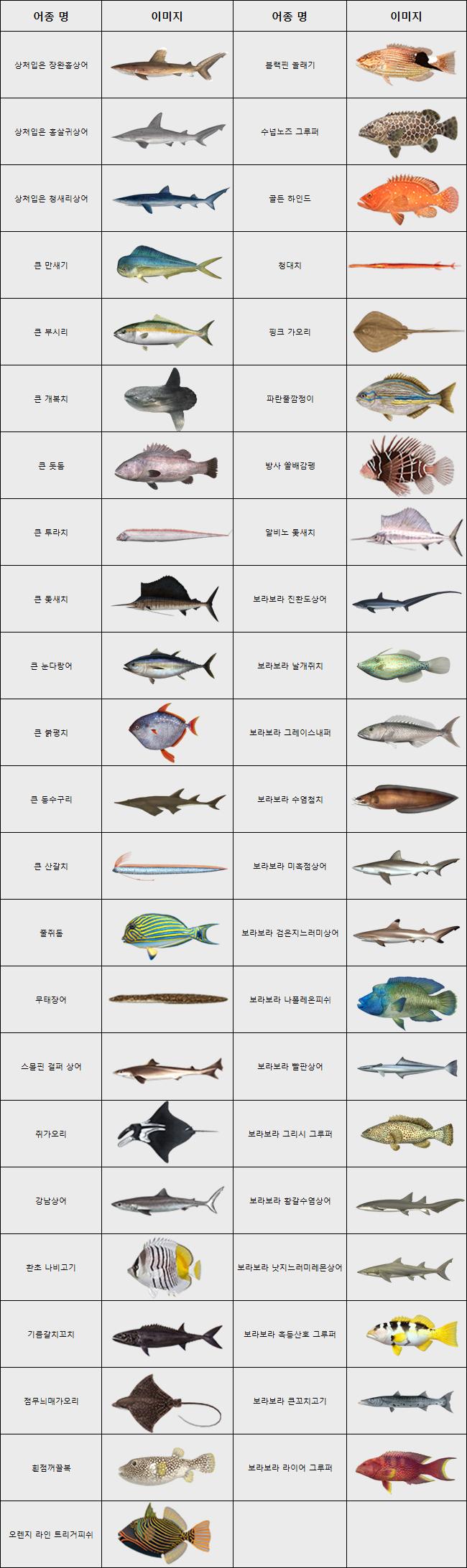 보라보라물고기.JPG