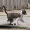 새끼 고양이 얼룩.jpg
