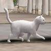 새끼 고양이 화이트.jpg
