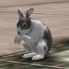 토끼 얼룩.jpg