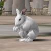 토끼 화이트.jpg